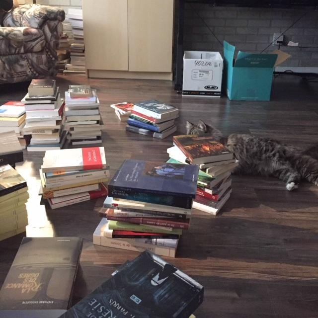 Mira-la-chatte-littéraire parmi quelques-uns des 400 livres qui seront donnés le 14 février.